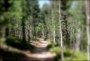 thru-the-trees211